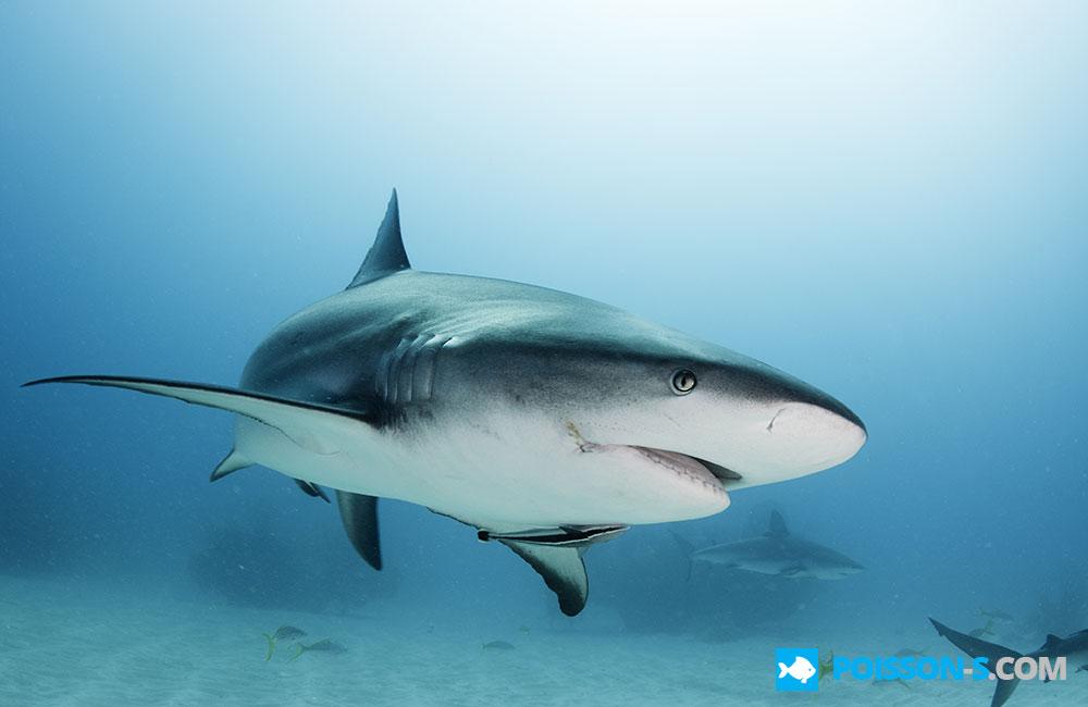 Photos poisson - Poisson shark aquarium ...
