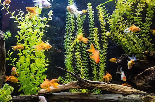 Aquarium poisson - Decoracion para acuarios ...
