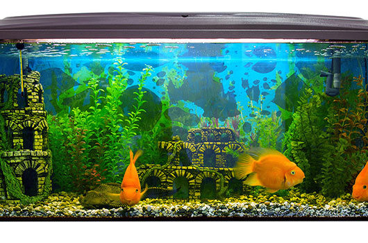 D coration poisson for Decoration pour aquarium d eau douce
